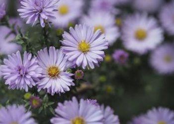 SPA & NATURE JUSTYNA BIELENDA RESORT BINKOWSKI - kwiatowy raj
