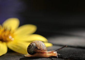 KOLaGEN Clinic - snailmed - zabieg odmładzająco napinający z czystym śluzem ślimaka i peptydami dla skór dojrzałych