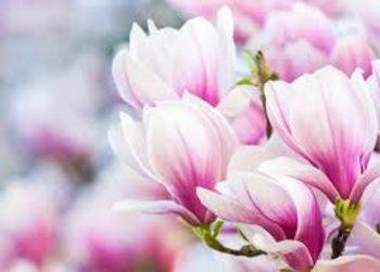 SPA & NATURE JUSTYNA BIELENDA RESORT BINKOWSKI - magnoliowy relaks