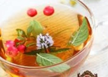 YASUMI SOSNOWIEC - herbaciana detoksykacja