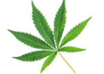 Gabinet Ingenium - cannabis therapy - bioterapia naprawcza z konopi