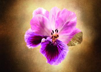 Beauty Lounge - aroma purete