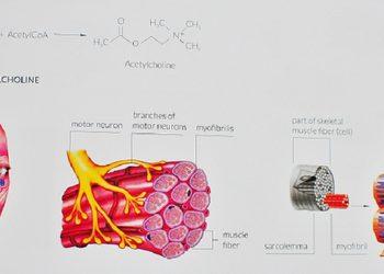 Zakątek Piękna -   mezoterapia igłowa muscle normalize(5 ml) podniesienie napięcia mięśniowego
